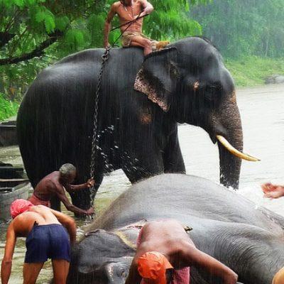 elefanti che fanno la doccia